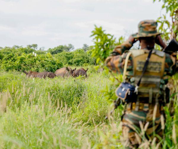 Henry Kosgei, a Kenya Wildlife Service Ranger, Meru National Park, Kenya monitoring the Black Rhino,s (Diceros bicornis) at Meru National Park. Meru National Park is home of there endangered Black Rhinos